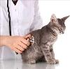 Ветеринарные клиники в Южно-Сахалинске
